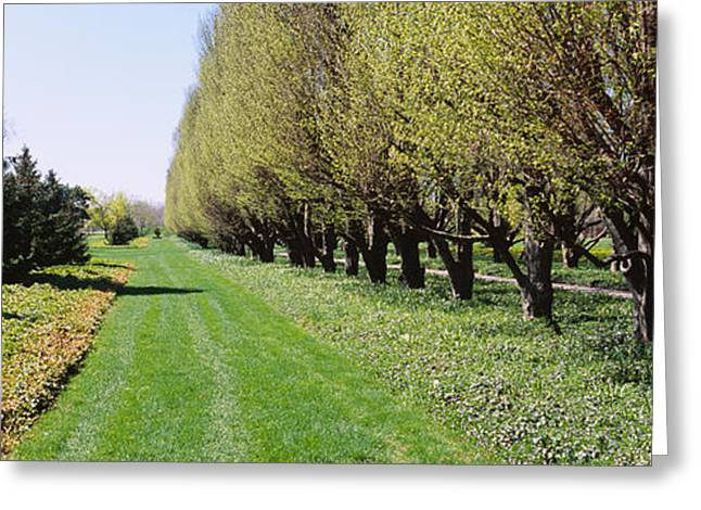 Fall Grass Greeting Cards - Trees Along A Walkway In A Botanical Greeting Card by Panoramic Images