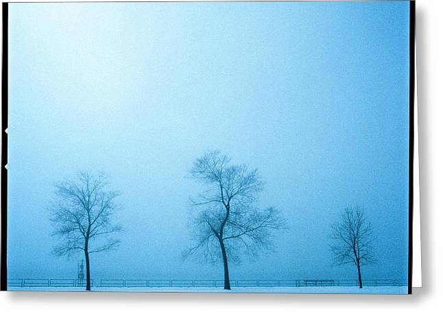 Despair Greeting Cards - Trees And Snow In Fog, Toronto, Ontario Greeting Card by Sofia Kinachtchouk