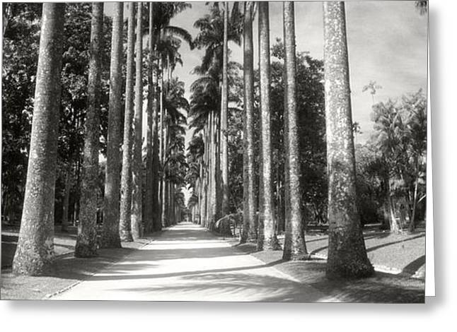 Garden Scene Photographs Greeting Cards - Trees Both Sides Of A Garden Path Greeting Card by Panoramic Images