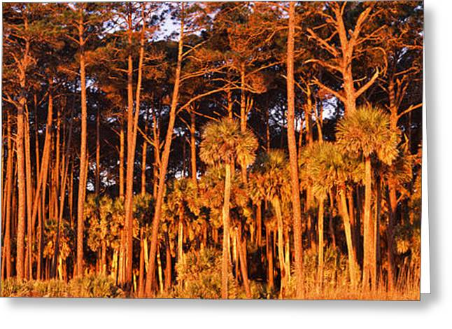 Beaufort Greeting Cards - Trees, Hunting Island State Park Greeting Card by Panoramic Images