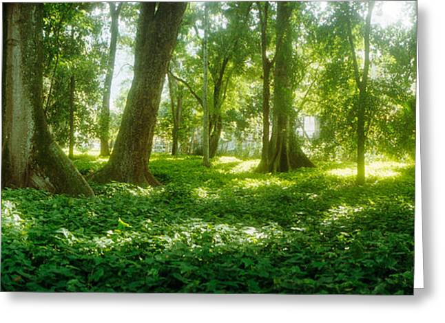 Garden Scene Photographs Greeting Cards - Trees In A Botanical Garden, Jardim Greeting Card by Panoramic Images