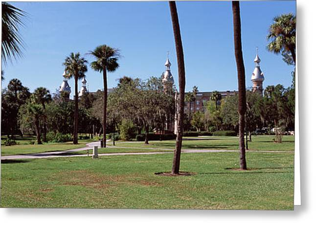 University Of Tampa Greeting Cards - Trees In A Campus, Plant Park Greeting Card by Panoramic Images