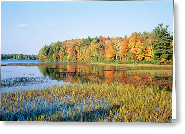 Fall Scenes Greeting Cards - Trees In A Forest At The Lakeside Greeting Card by Panoramic Images
