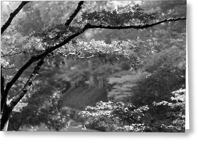 British Columbia Greeting Cards - Trees In A Garden, Butchart Gardens Greeting Card by Panoramic Images