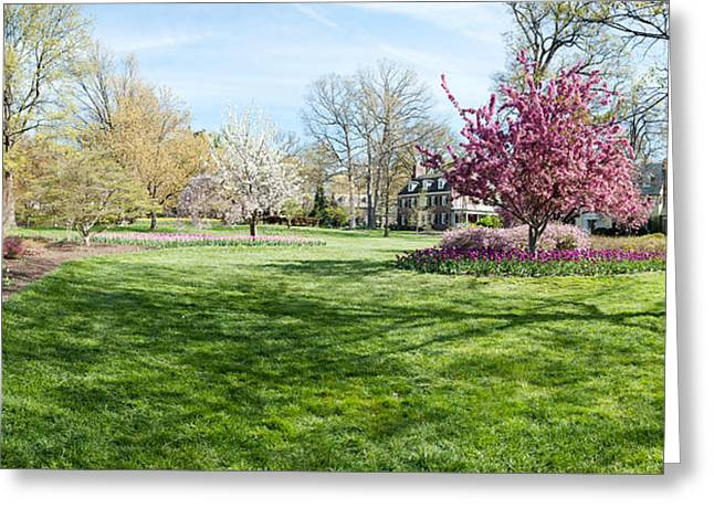 Garden Scene Greeting Cards - Trees In A Garden, Sherwood Gardens Greeting Card by Panoramic Images