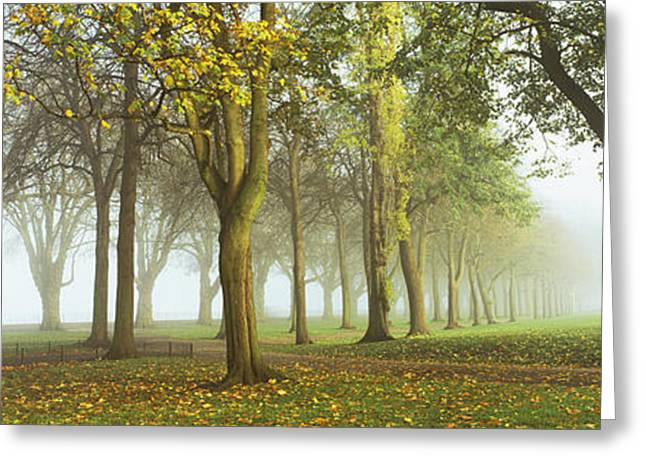 Fallen Leaf Greeting Cards - Trees In A Park During Fog, Wandsworth Greeting Card by Panoramic Images