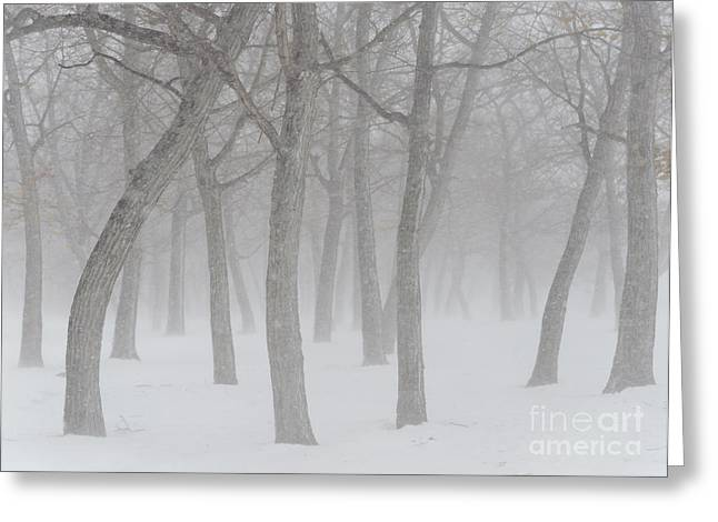 Snowstorm Greeting Cards - Trees In Snowstorm Greeting Card by John Shaw