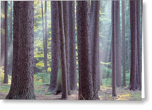 Bohemia Greeting Cards - Trees In The Forest, South Bohemia Greeting Card by Panoramic Images