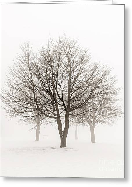 Brown Tones Greeting Cards - Trees in winter fog Greeting Card by Elena Elisseeva