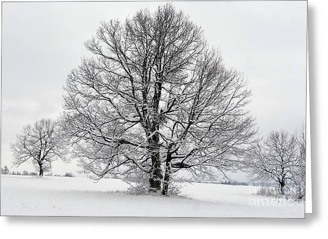 Snowy Day Greeting Cards - Trees In Winter Greeting Card by Michal Boubin