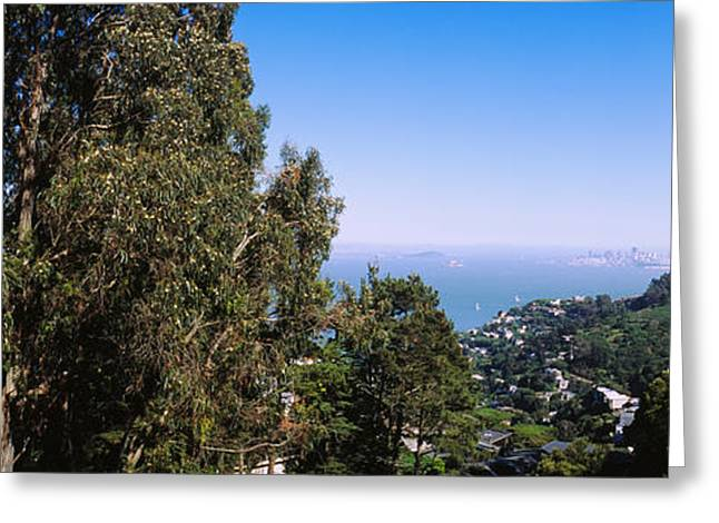 Trees On A Hill, Sausalito, San Greeting Card by Panoramic Images