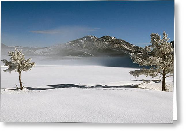 Haze Greeting Cards - Trees On A Snow Covered Landscape Greeting Card by Panoramic Images