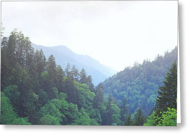 Smoky Greeting Cards - Trees With A Mountain Range Greeting Card by Panoramic Images