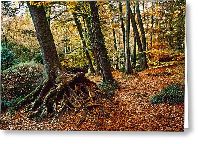 Trees With Granite Rock At Huelgoat Greeting Card by Panoramic Images