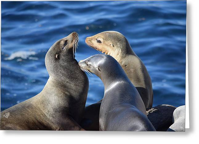 California Sea Lions Greeting Cards - Tres Amigos Greeting Card by Eric Johansen