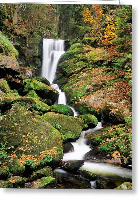 Fallen Leaf Greeting Cards - Triberg Waterfall In Autumn, Black Greeting Card by Panoramic Images