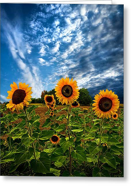 Autumn Flowers Greeting Cards - Trinity Greeting Card by Phil Koch