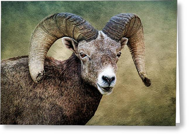 Sheep On Rocks Greeting Cards - Trophy Bighorn Greeting Card by Steve McKinzie