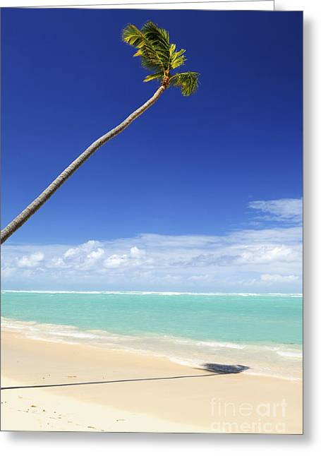 Minimalist Landscape Greeting Cards - Tropical beach and palm tree Greeting Card by Elena Elisseeva