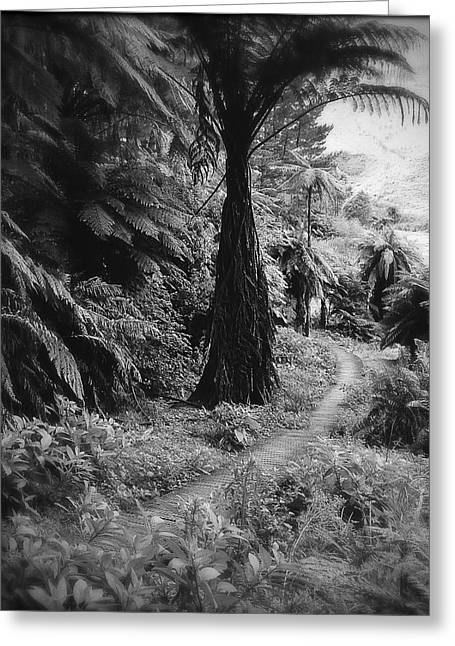Black And White Photos Greeting Cards - Tropical forest Greeting Card by Les Cunliffe