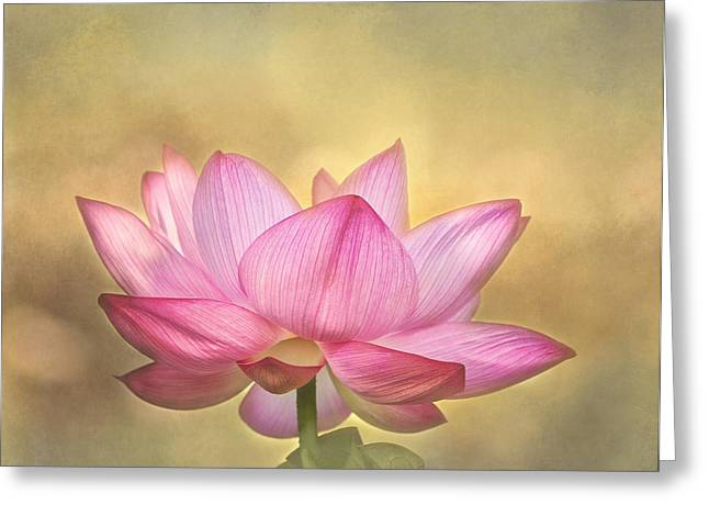 Pink Lotus Greeting Cards - Tropical Lotus Flower Greeting Card by Kim Hojnacki