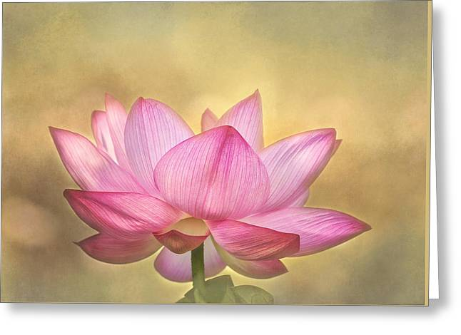 Pink Lotus Greeting Cards - Tropical Lotus Flower Greeting Card by Kim Hojnacki