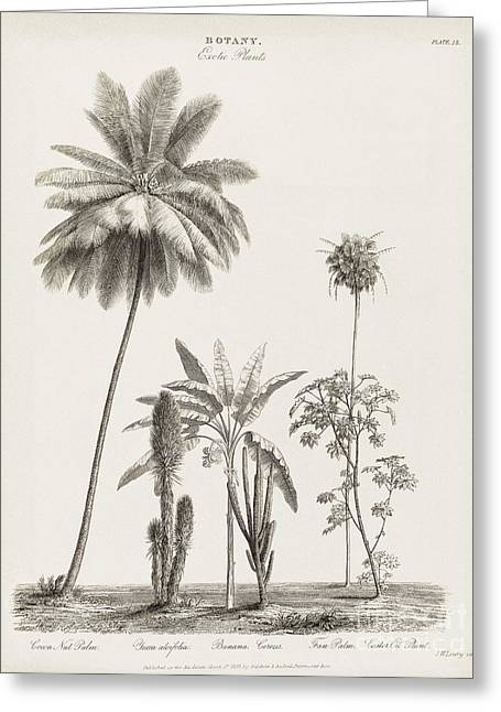 1833 Greeting Cards - Tropical Plants, 19th Century Greeting Card by Middle Temple Library
