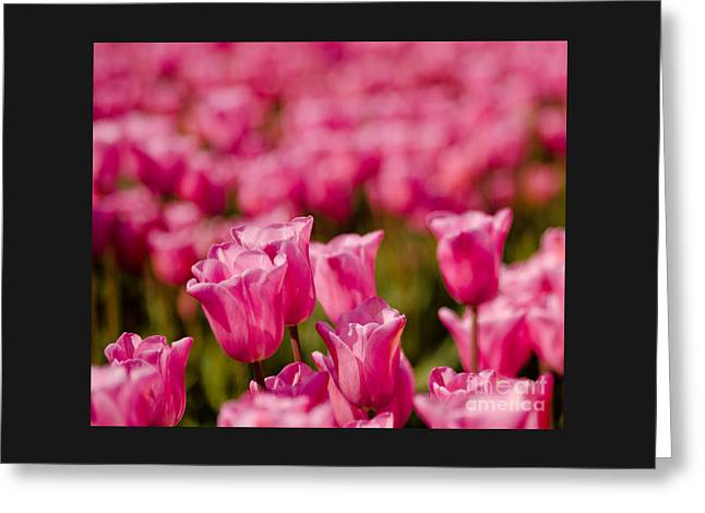 Nikkor Greeting Card featuring the photograph Pink by Nick  Boren