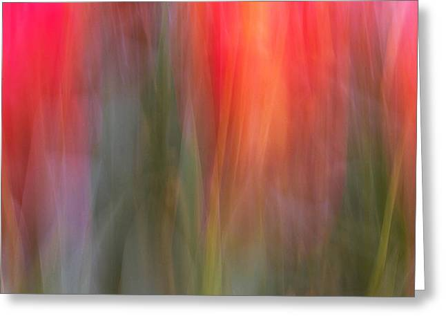 Abstract Tulips Greeting Cards - Tulip Waves Greeting Card by Marion McCristall