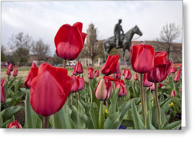 Floral Digital Art Greeting Cards - Tulips at Texas Tech University Greeting Card by Melany Sarafis