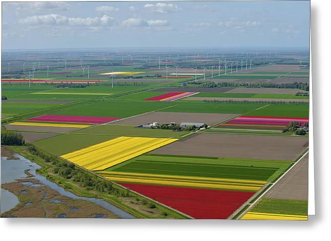 Agronomy Greeting Cards - Tulips Fields, Zeewolde Greeting Card by Bram van de Biezen