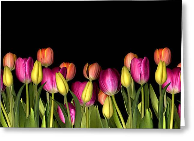 Botany Greeting Cards - Tulips Greeting Card by Jacqui Martin