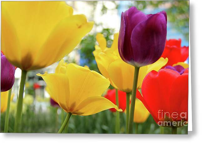 Thinking Of You Greeting Cards - Tulips  Greeting Card by Mark Ashkenazi