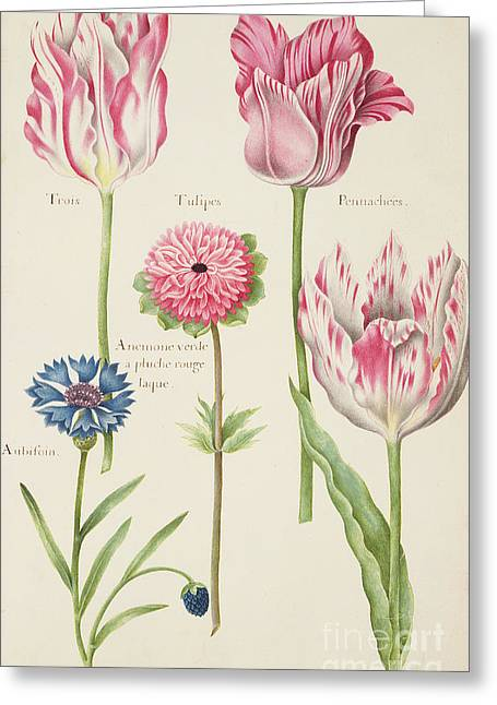 Tulips Greeting Card by Nicolas Robert