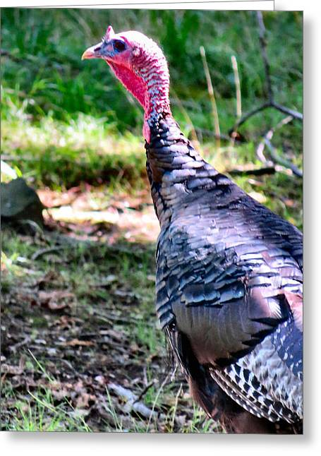 Best Sellers -  - Juvenile Turkey Greeting Cards - Turkey Lurkey Greeting Card by Michelle Milano
