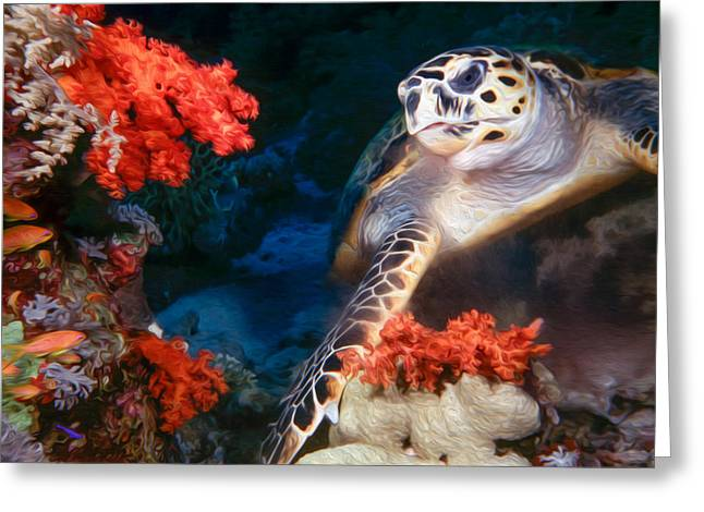 Undersea Photography Greeting Cards - Turtle Greeting Card by Roy Pedersen