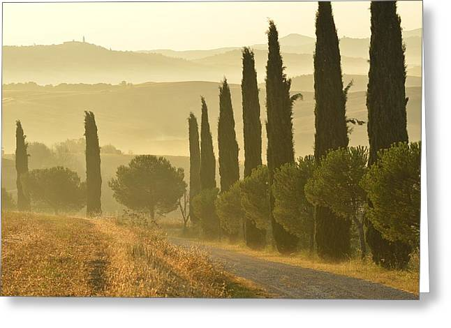 Gravel Road Greeting Cards - Tuscany Greeting Card by Christian Heeb