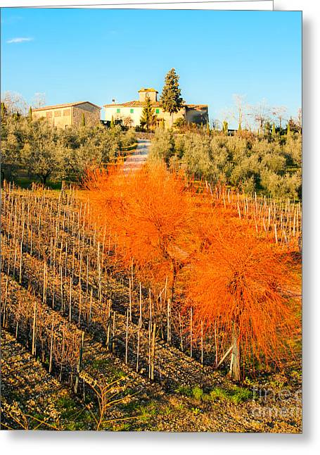 Tuscan Sunset Greeting Cards - Tuscany landscape Greeting Card by Luciano Mortula