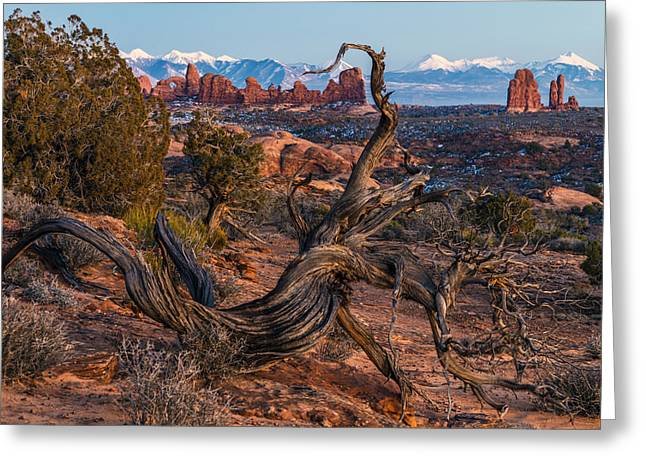 Southern Utah Greeting Cards - Twisted Desert Greeting Card by Dustin  LeFevre