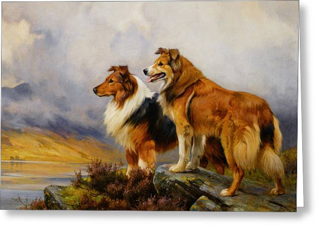 Wright Barker Greeting Cards - Two Collies Above A Lake Greeting Card by Wright Barker