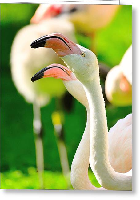 Vertebrate Mixed Media Greeting Cards - Two flamingos Greeting Card by Toppart Sweden