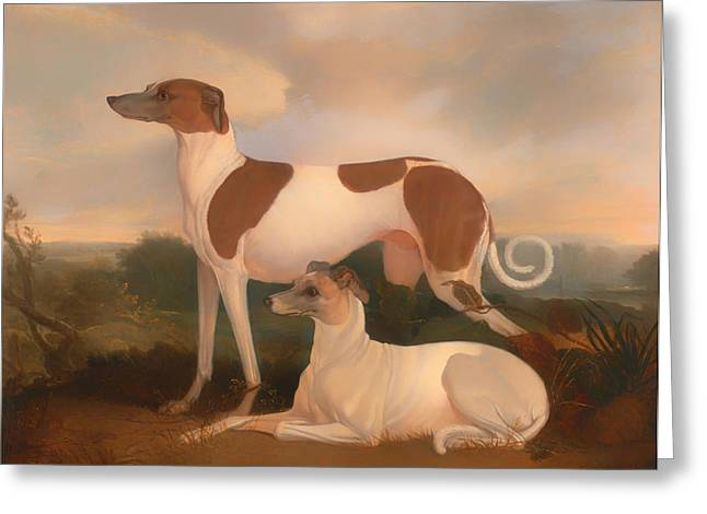 Greyhound Dog Greeting Cards - Two Greyhounds in a Landscape Greeting Card by Charles Hancock