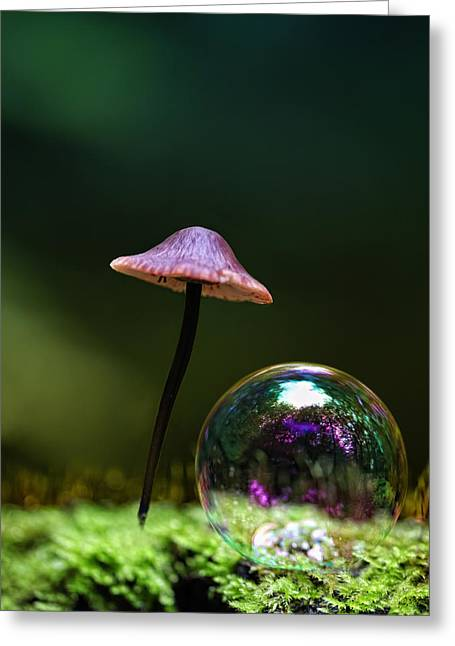 Round Fungi Greeting Cards - Under the hat Greeting Card by Kent Mathiesen