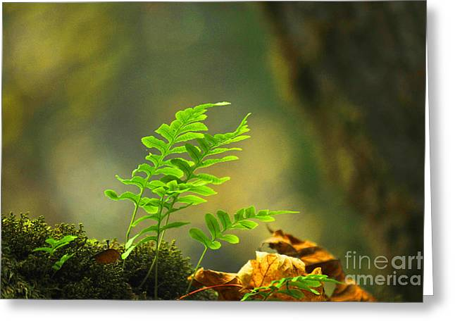 Nature Study Greeting Cards - Untitled 1 Greeting Card by Raphael Bruckner