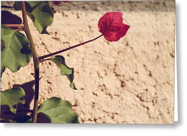 Vines Greeting Cards - Untitled Greeting Card by Laurie Search