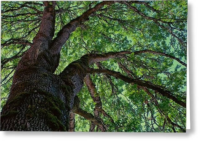 Moss Green Greeting Cards - Up a Tree Greeting Card by Bonnie Bruno