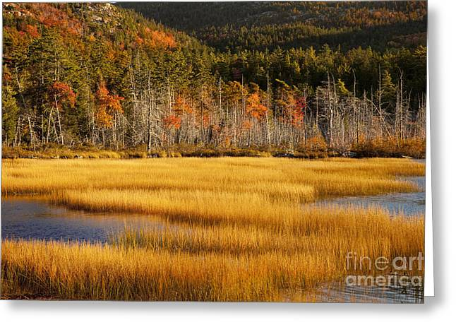 Mt Desert Island Greeting Cards - Upper Hadlock Pond Greeting Card by Brian Jannsen