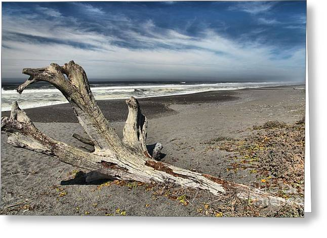 Northern California Beaches Greeting Cards - Uprooted Greeting Card by Adam Jewell