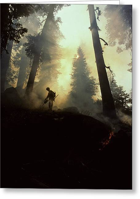 Usa, California, Forest Fire, Sequoia Greeting Card by Gerry Reynolds