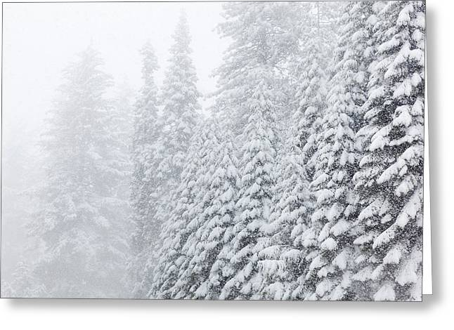 Usa, California, Oakhurst Greeting Card by Jaynes Gallery